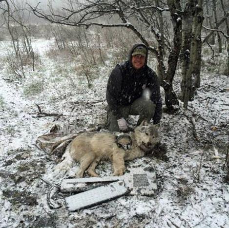 Blackfeet-wolve.jpeg
