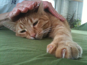 Reiki for cats