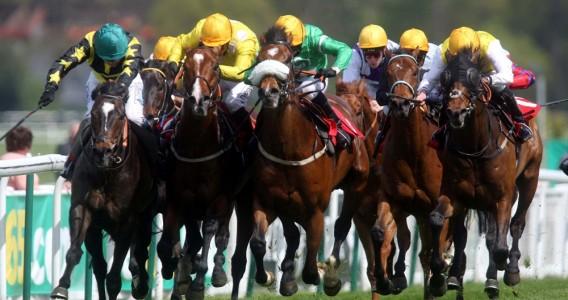 Reiki pour les sports équestres
