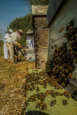Curso de apicultura info   apiculturamallorca