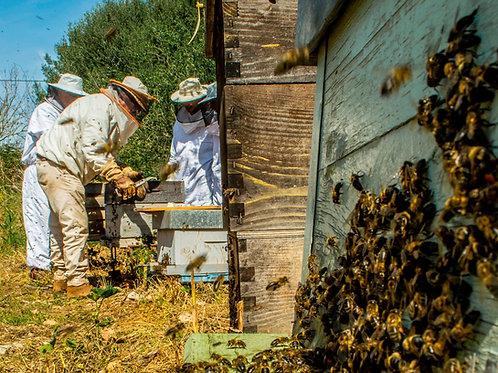 Regala 50.000 abejas. Obsequia un apadrinamiento