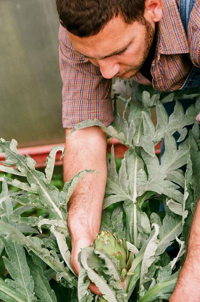 Pflanzenpfelge und Schulungen