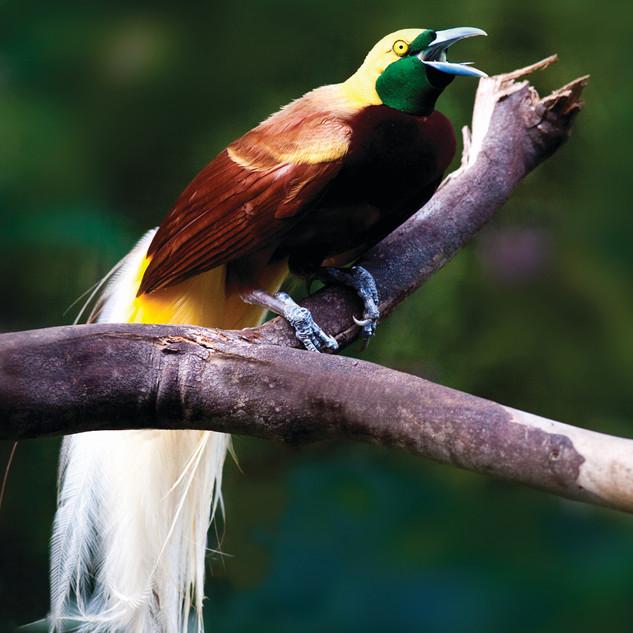 Pic 3 - Bird of Paradise.jpg