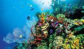 Great Barrier Reef 03.jpg
