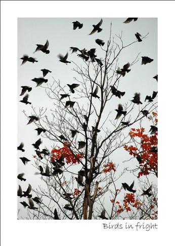 Birds in fright
