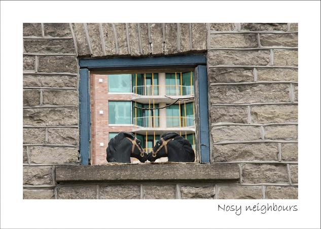Nosy neighbours