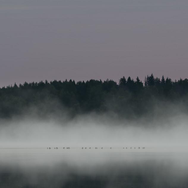 The Goose Gang.jpg