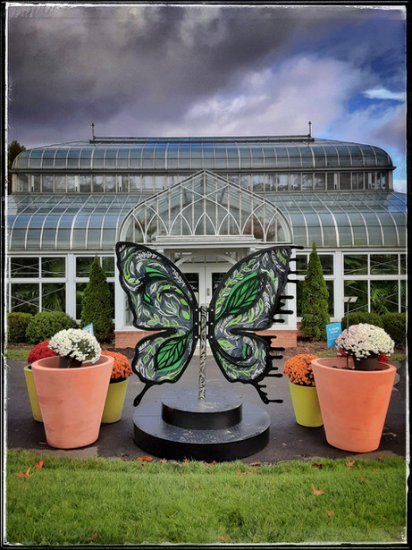Evelyn Ivy Bipolar Butterfly