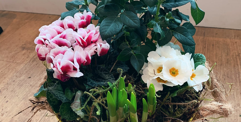 Planted Spring Arrangement