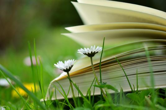 blur-book-book-pages-415061.jpg