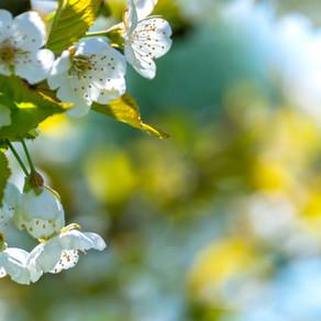 background-beautiful-bloom-96627.jpg