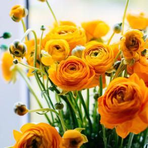 beautiful-bloom-blooming-2317921.jpg