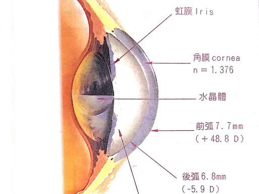 淺談近視、假性近視、遠視、老花、散光 眼球屈光系統