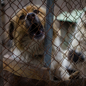 Pet Shops/Puppy Mills