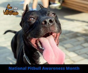 Pit Bull Awareness Month