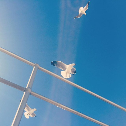 Hello #seagulls