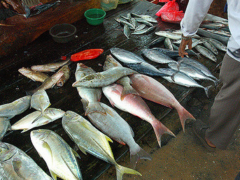 Climate Change is Putting Fisheries Around the World at Risk