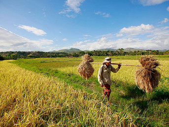 Resilient Farming in Timor-Leste