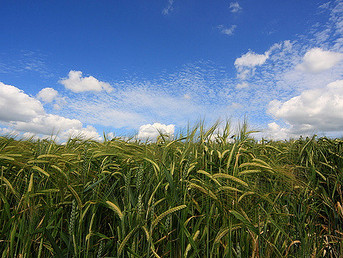 South Africa: GM Crops Could Help Save Lives Says Researcher