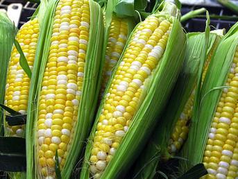 Zambia: El Niño Pushes Zambian Farmers to Question Maize Habit