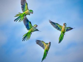 Botswana: Drought Affects Bird Migration