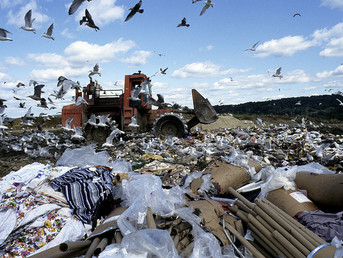 Storks Spend Winter Eating Rubbish in Landfills Instead of Flying to Africa