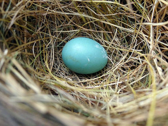 Climate Change Will Remove Birds' Control Over Hatching Eggs