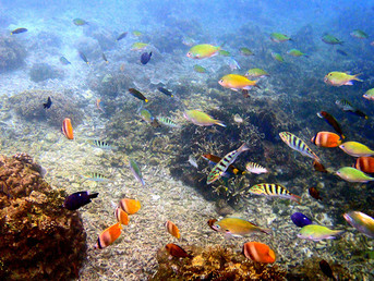 Coral IVF Offers Hope for World's Threatened Reefs