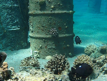 Israel is joining forces with Arab states to save coral from climate change destruction