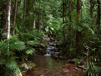 The Solution for the Melting Polar Ice Caps May Be Hiding in the Rainforest
