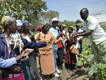 African Forestry Experts to Meet in Kenya Over Climate Change