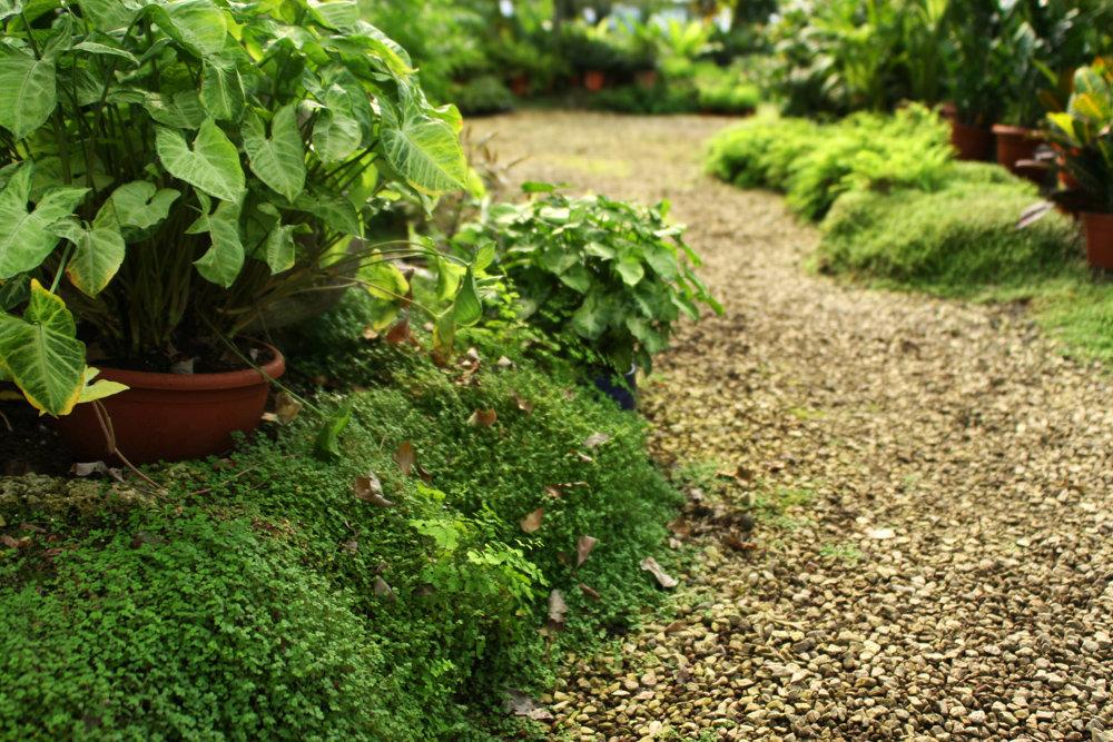 paisagismo São Paulo, plantas nativas, ecológico, jardins