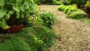 Feel better and Do better by Planning or Creating a More Sustainable Landscape