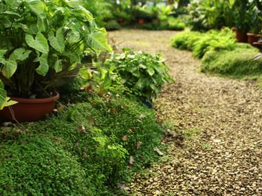 Terça de Projeto | Jardim linear