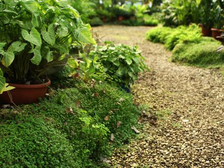 Les Français rêvent de plus en plus d'un jardin !