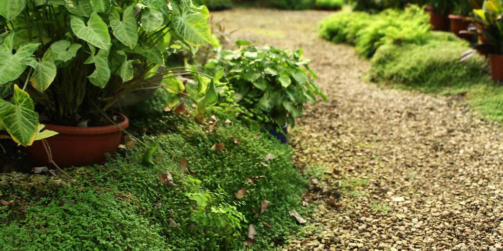 Curso Horta de Ervas - com prática em canteiro