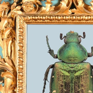 falling in love with insects