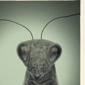 letters to insects