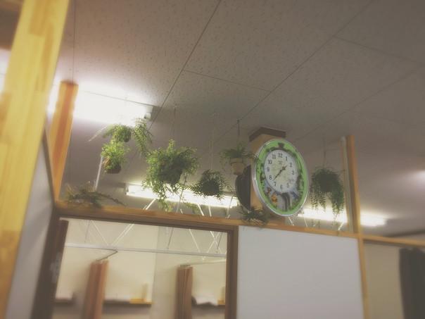壁面緑化装飾