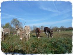 Histoires d'ânes