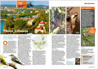 Here's David Lindo's latest article for Bird Watching Magazine. Set in stunning Vilius, Lith