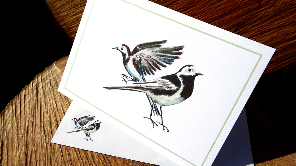 Pied Wagtails.JPG