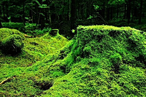 forest-483206_1920.jpg