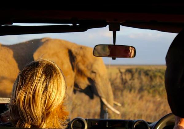 Read: Safari for the Whole Family
