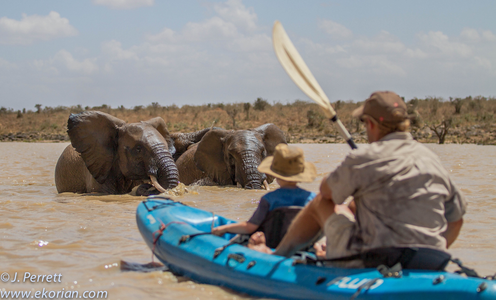 Read: Kayaking with Elephants
