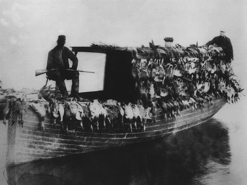 day-of-duck-hunting-Turkey-Point-circa-1910
