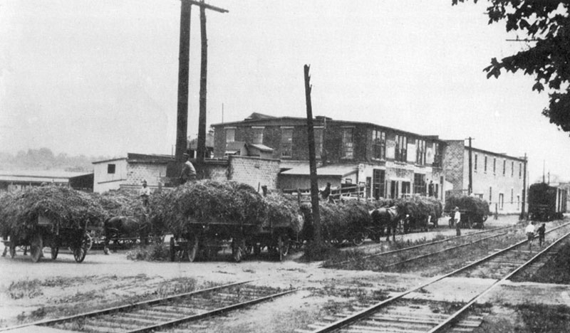 hay-wagons-pea-vines-processing-port-dover-canning-company-1925