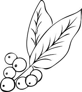 Zhi Illustration 4.jpg