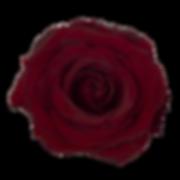 BLACK-PEARL700X700-3_edited.png