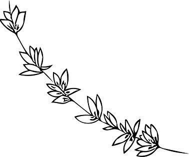 Zhi Illustration 3.jpg